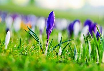 flower-1363509489nRV