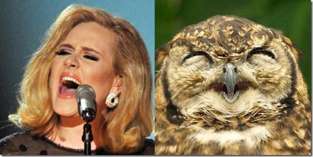 pop-stars-birds-9