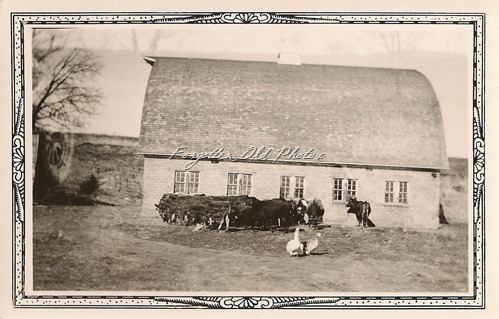 Barn with cattle Tin Ceiling