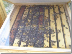 včelky4,4,2012 110