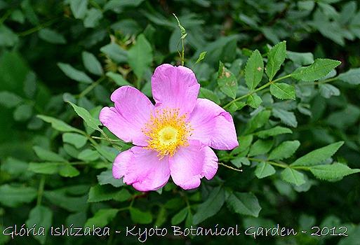 Glória Ishizaka -   Kyoto Botanical Garden 2012 - 122