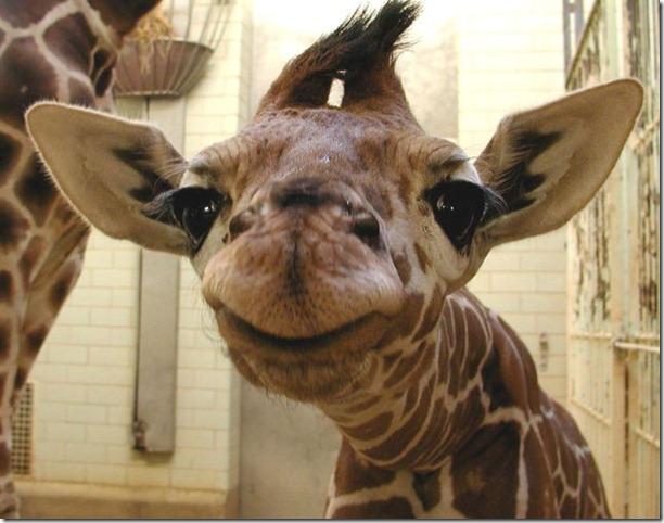 funny-animals-cute-31
