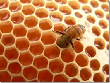Tratamientos para el Cabello con Miel de Abeja1