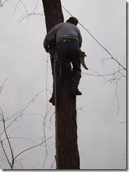 tree fun march 2013 013