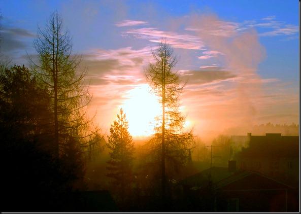 suomalainen syys metsä suppilovahvero 004