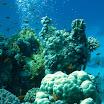 koral_34.jpg