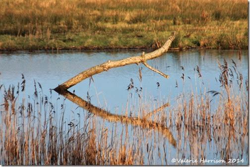 51-reeds