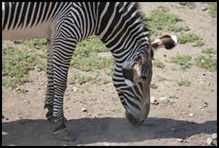 Zoo5 037