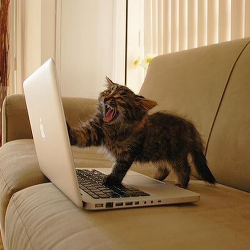 Ekspresi Kucing Kalo Internet Lemot