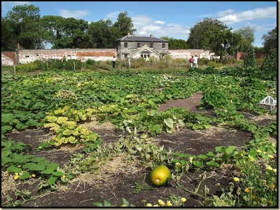 Shugborough - The Walled Garden