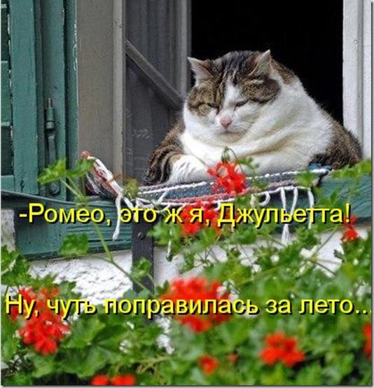 kotomatritsa_cU
