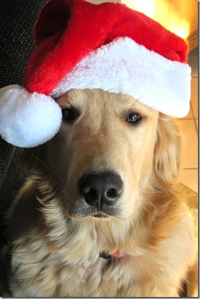perro gorritos navidad (29)