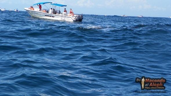 Viajar a Isla Holbox Nadar con el Tiburon Ballena 1
