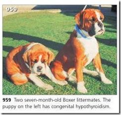 Hipotireoidismo congenito
