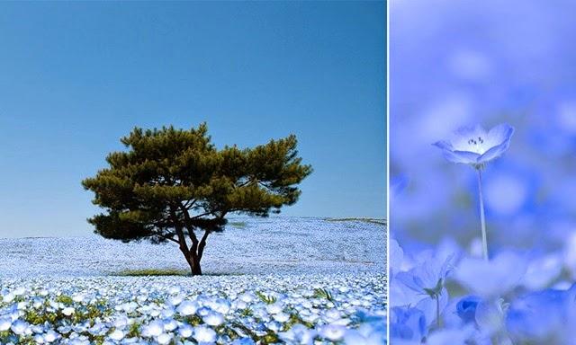 flores-japao