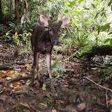 野生動物たちの保全にとって必要な措置とは? / What must be done to promote wildlife conservation?