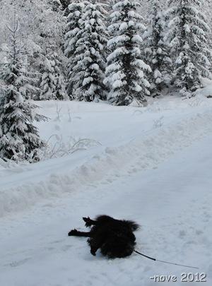 Winter 023