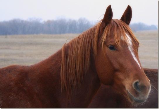 horses 021-001a