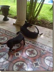 Pipo & Taquita 2