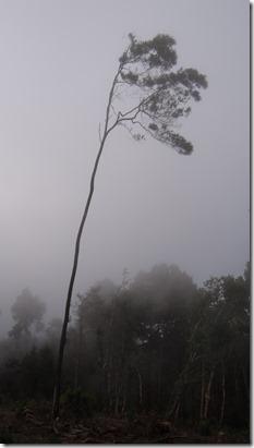 Un tout seul dans la brume façon fin du monde ou pochette d'album de Dub Inc