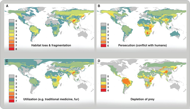 Maps showing the the spatial overlap for the ranges of large-carnivore species by threat category for habitat loss and fragmentation, persecution, utilization, and depletion of prey. Graphic: Ripple, et al., 2014 / DOI: 10.1126/science.1241484