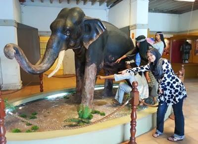 Larut si gajah