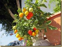 2013-03-04 - AZ, Yuma - Cactus Gardens, my garden -002
