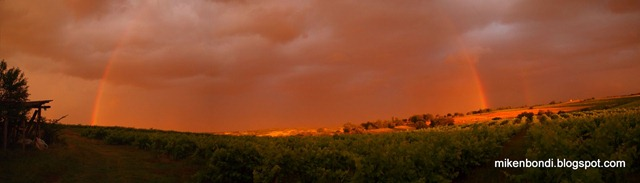 Rainbow over the vineyards