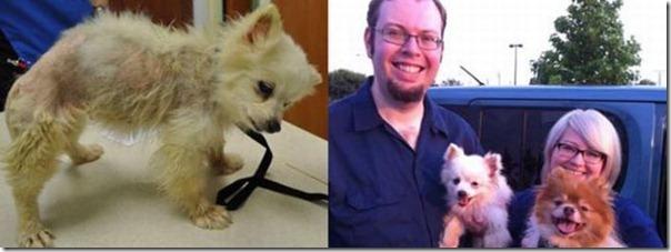 Animais Antes e Depois do Resgate (20)