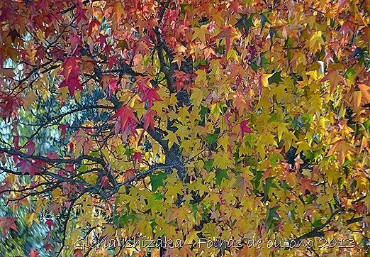 14  Glória Ishizaka - Folhas de Outono 2013