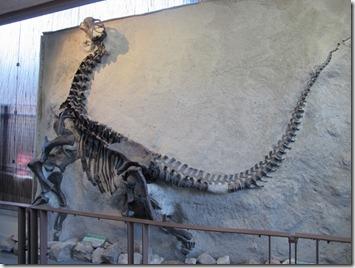 705 camarasaurus (640x480)