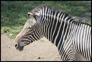 Zoo5 025