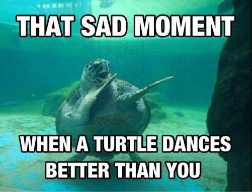 The Sad Moment When Turtle Dance Better Than You