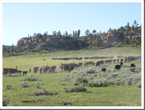 montana 2013 trail 623
