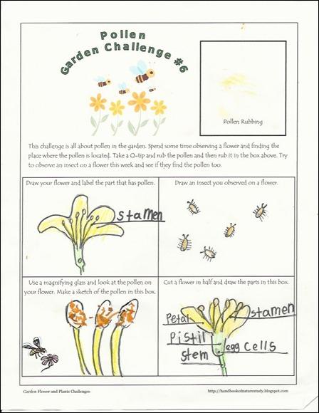 pollen challenge