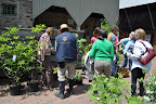 Visitors buying native plants