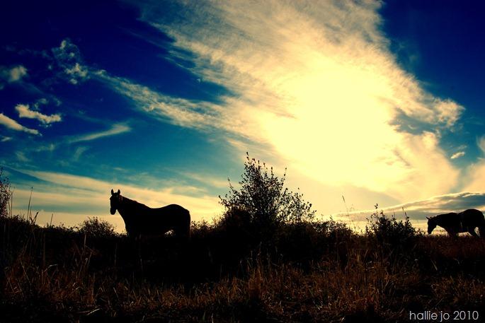 deer and horses 0126 - Copy