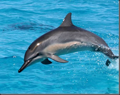 Amazing Animals Pictures Dolphin (1)