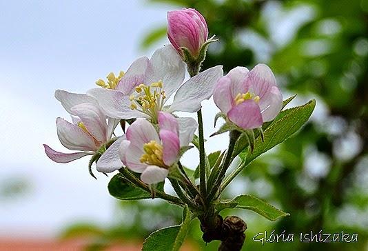Glória Ishizaka - 6