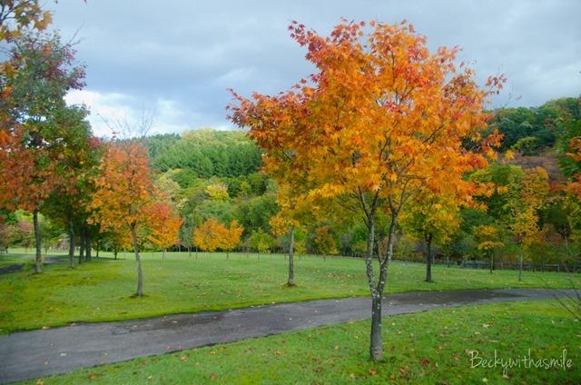 2013-10-12 Furano Fall Colors 049