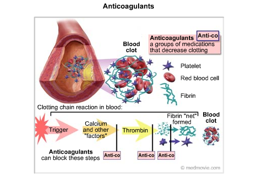 example of anticoagulants | examplesof, Skeleton