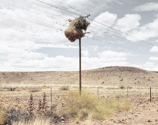 Ninhos postes 02