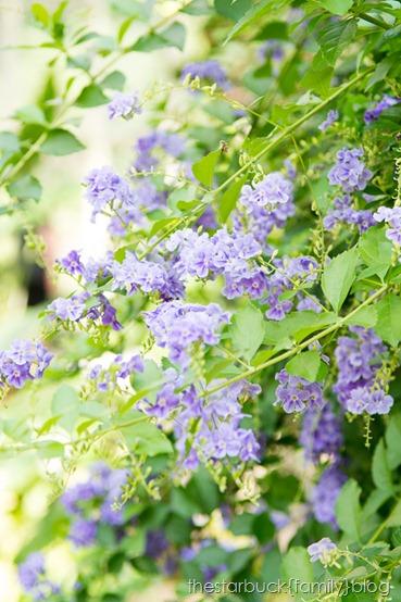 Callaway Gardens butterfly garden blog-7
