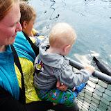 Fjord og Bælt med sæler og marsvin
