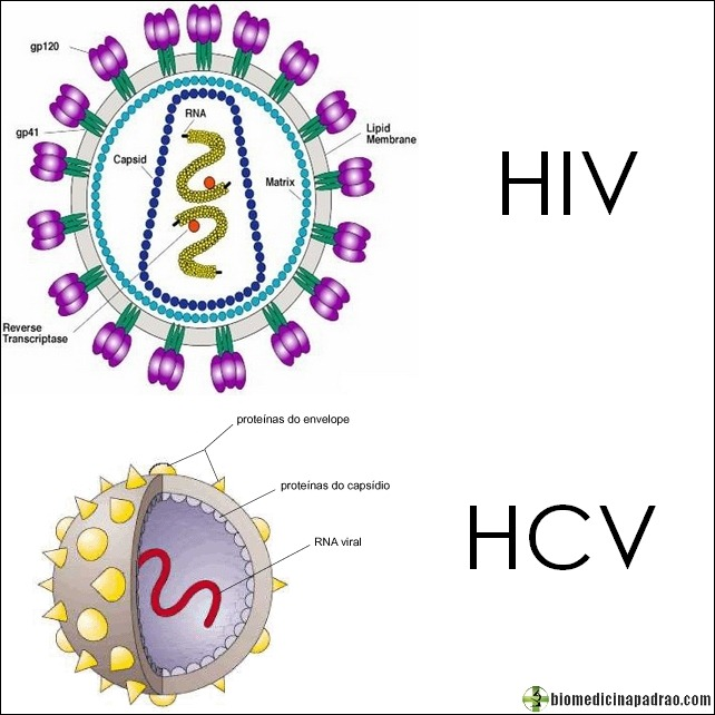 HIV-HCV