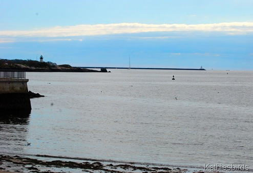 8. Gloucester beach-kab