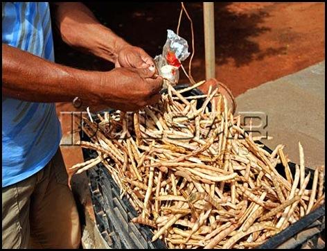 Pequeno agricultor debulhando feijão-de-corda na zona rural de Mossoró