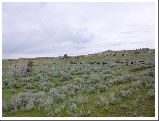 montana 2013 trail 198