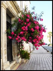 R-roses_thumb1