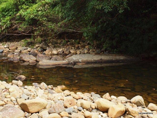 river_in_sarawak_22